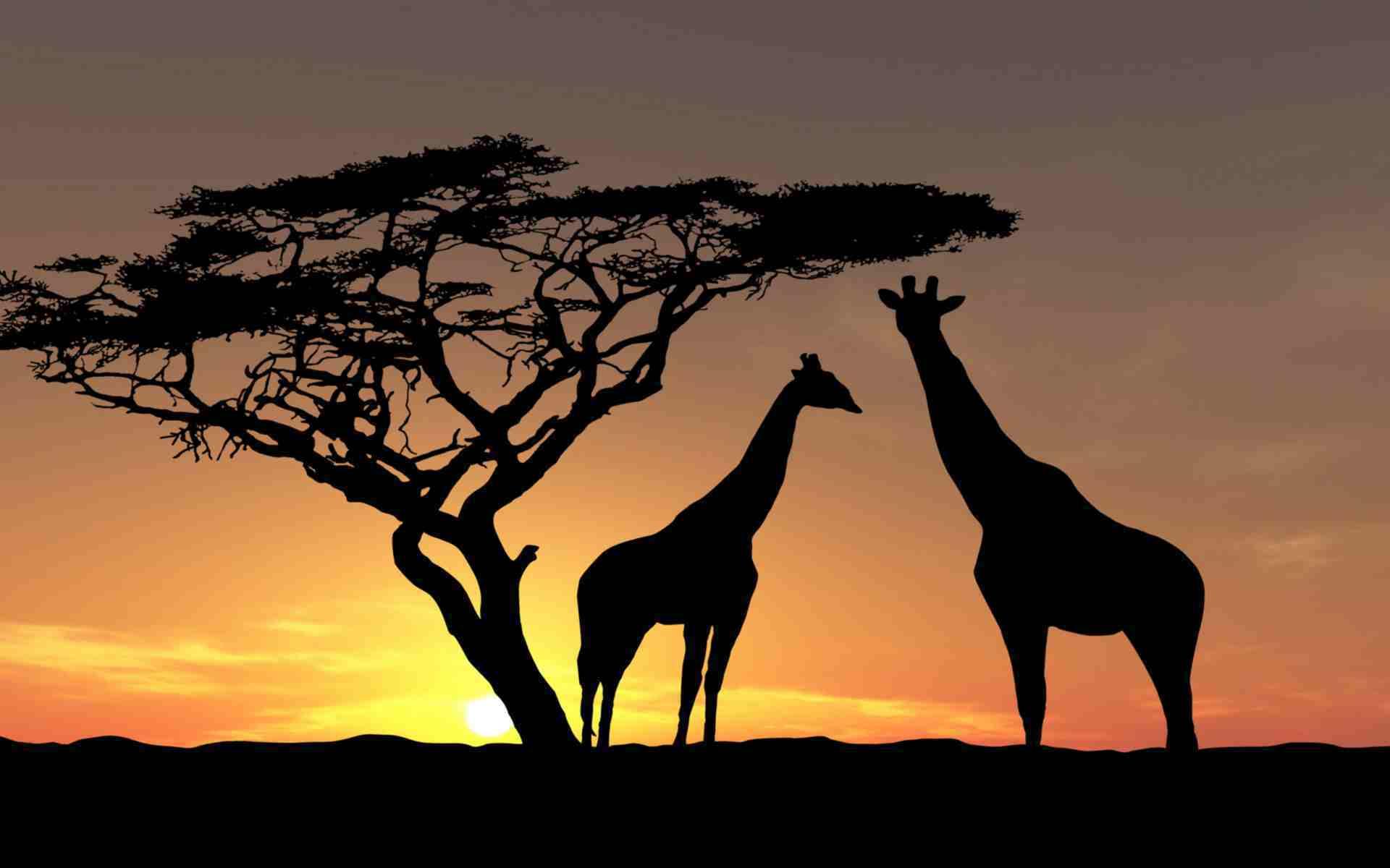 Un petit clic pour se faire plaisir avec superbe safari
